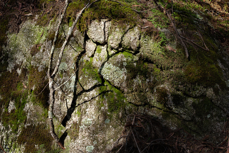 2. FORSHADOWING. Verb. - Language group: FOREST      Meaning: Telling a tree story to the nearest rock